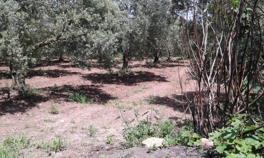 Mudanya Işıklı Satılık Arazi