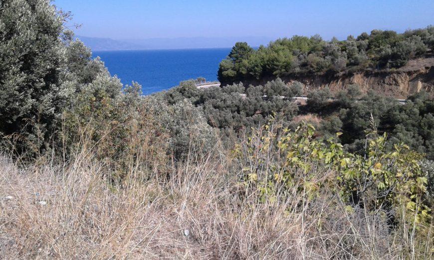 Mudanya Kumyaka Deniz Manzaralı Zeytinlik